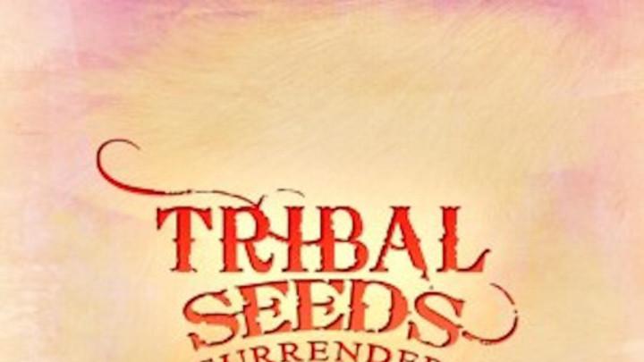 Tribal Seeds - Surrender [2/11/2016]
