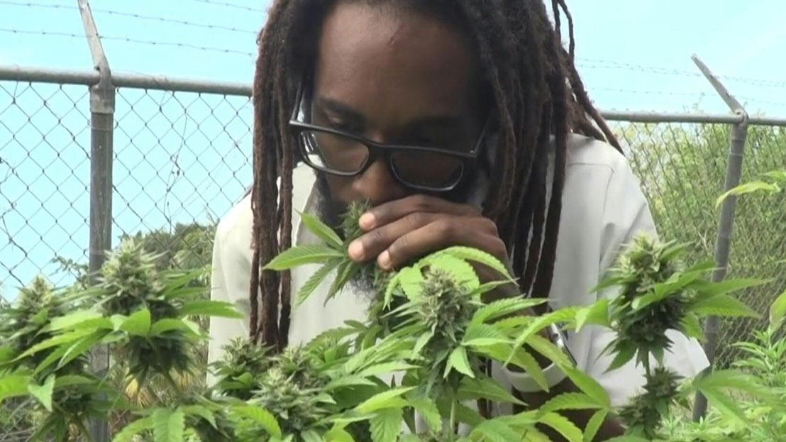 Dr. Machel Emanuel Recreates Marijuana Smoked by Bob Marley (AfricaNews Report) [6/4/2019]