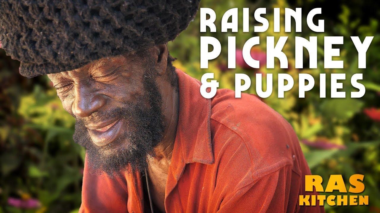 Ras Kitchen - How to Raise Pickney/Puppies & Fertility Health Tips with Rasta Mokko [9/20/2019]