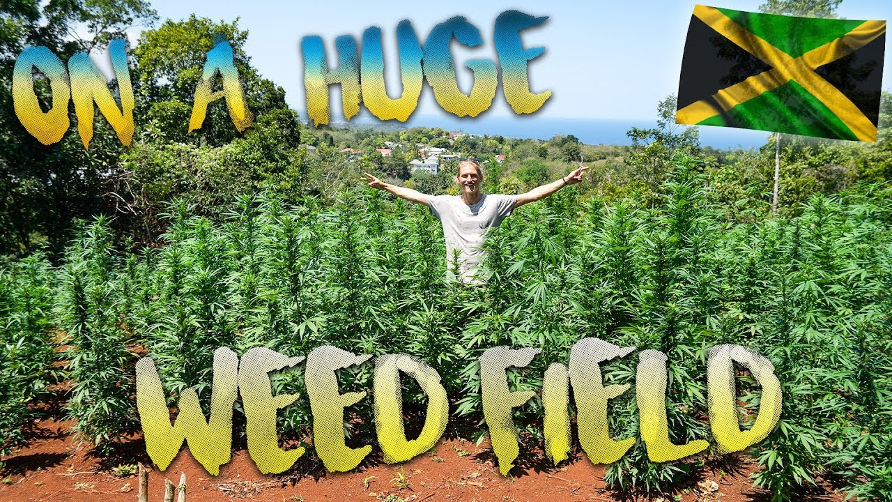 BackpackingSimon - Found A Huge Weed Field in Jamaica [4/11/2019]