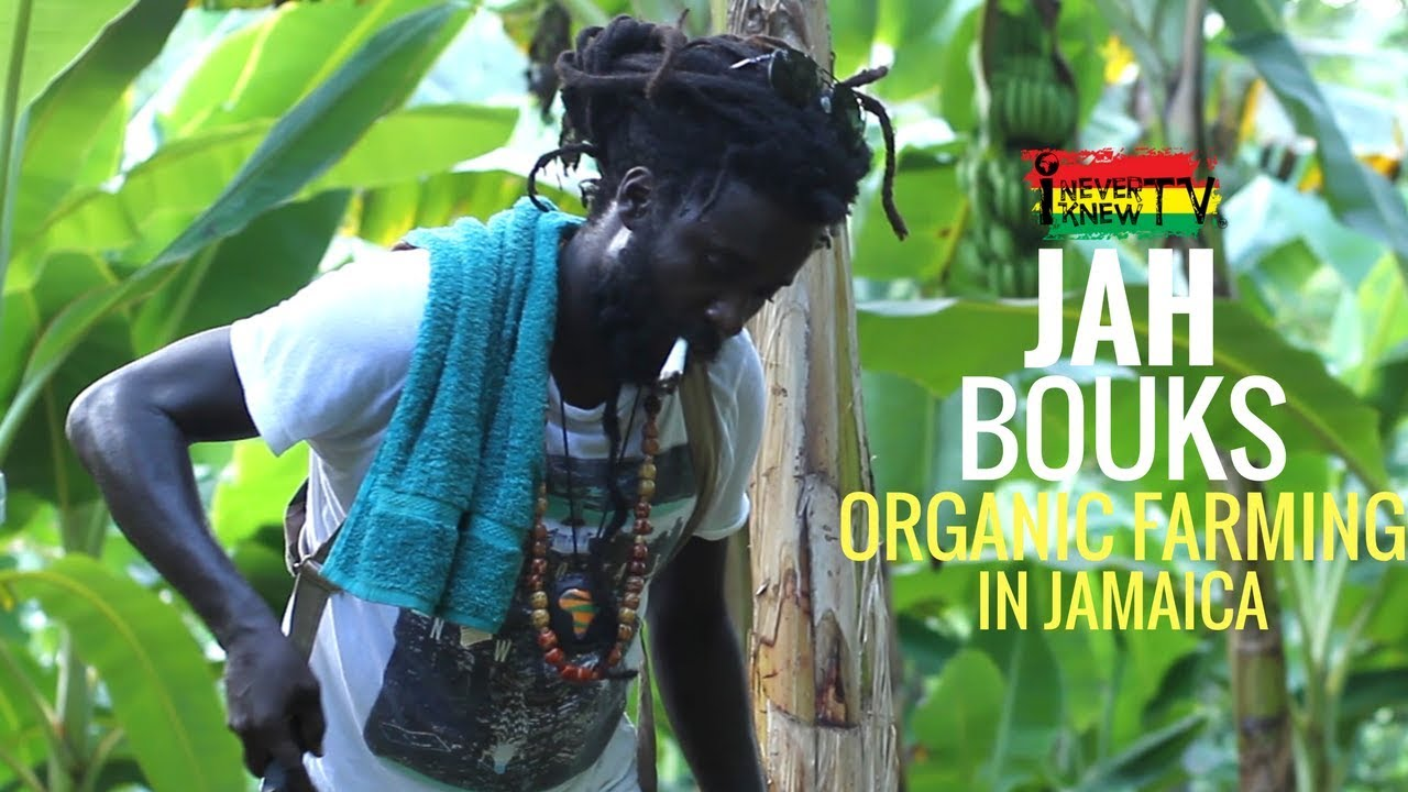 Interview with Jah Bouks about organic farming in Jamaica (I NEVER KNEW TV) [3/14/2018]