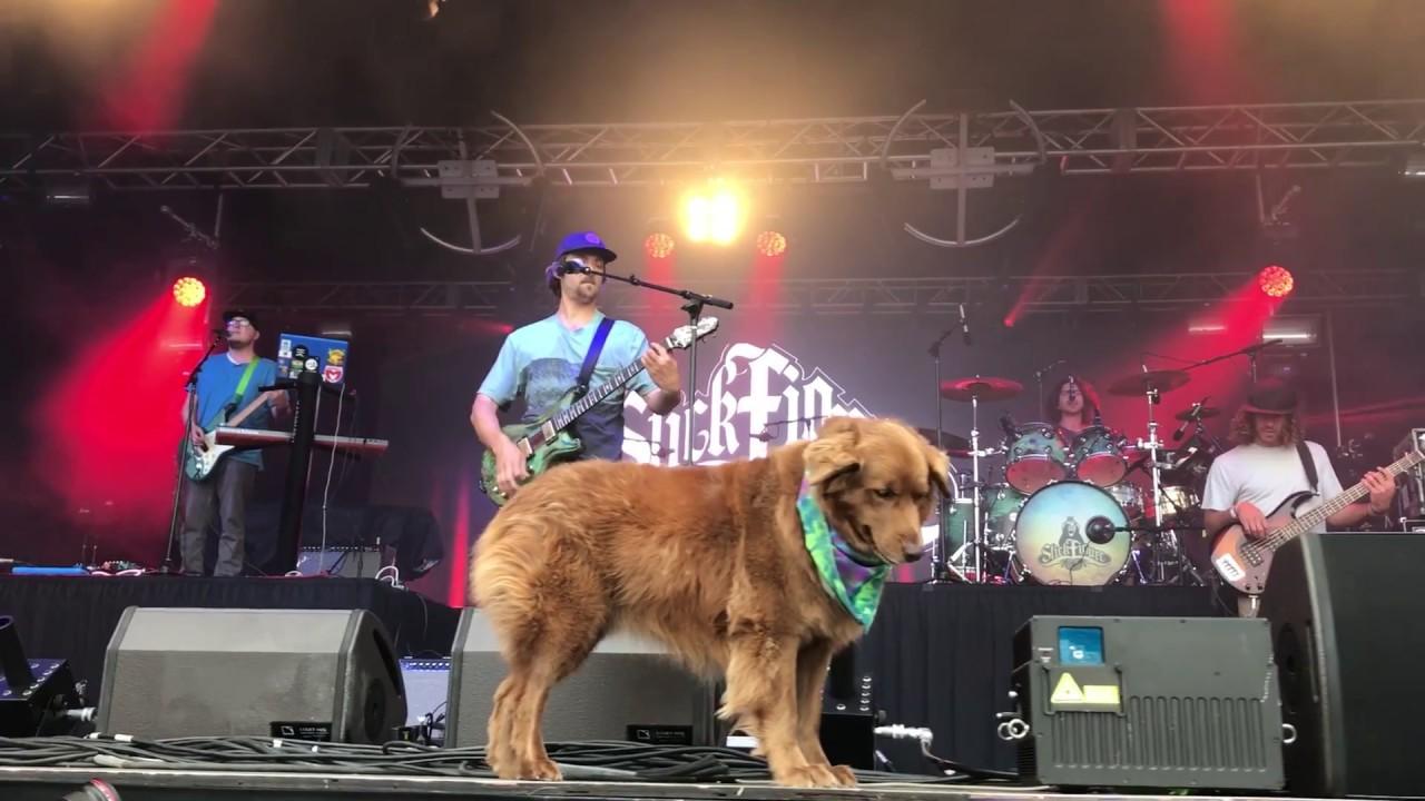 Stick Figure @ California Roots Festival 2017 (Recap) [6/2/2017]