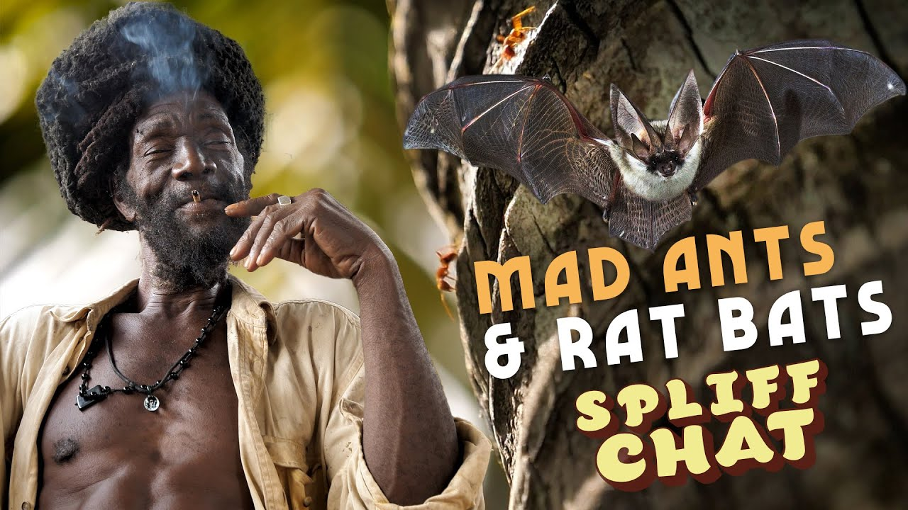 Ras Kitchen - Mad Ants and Rat Bats! [7/9/2021]