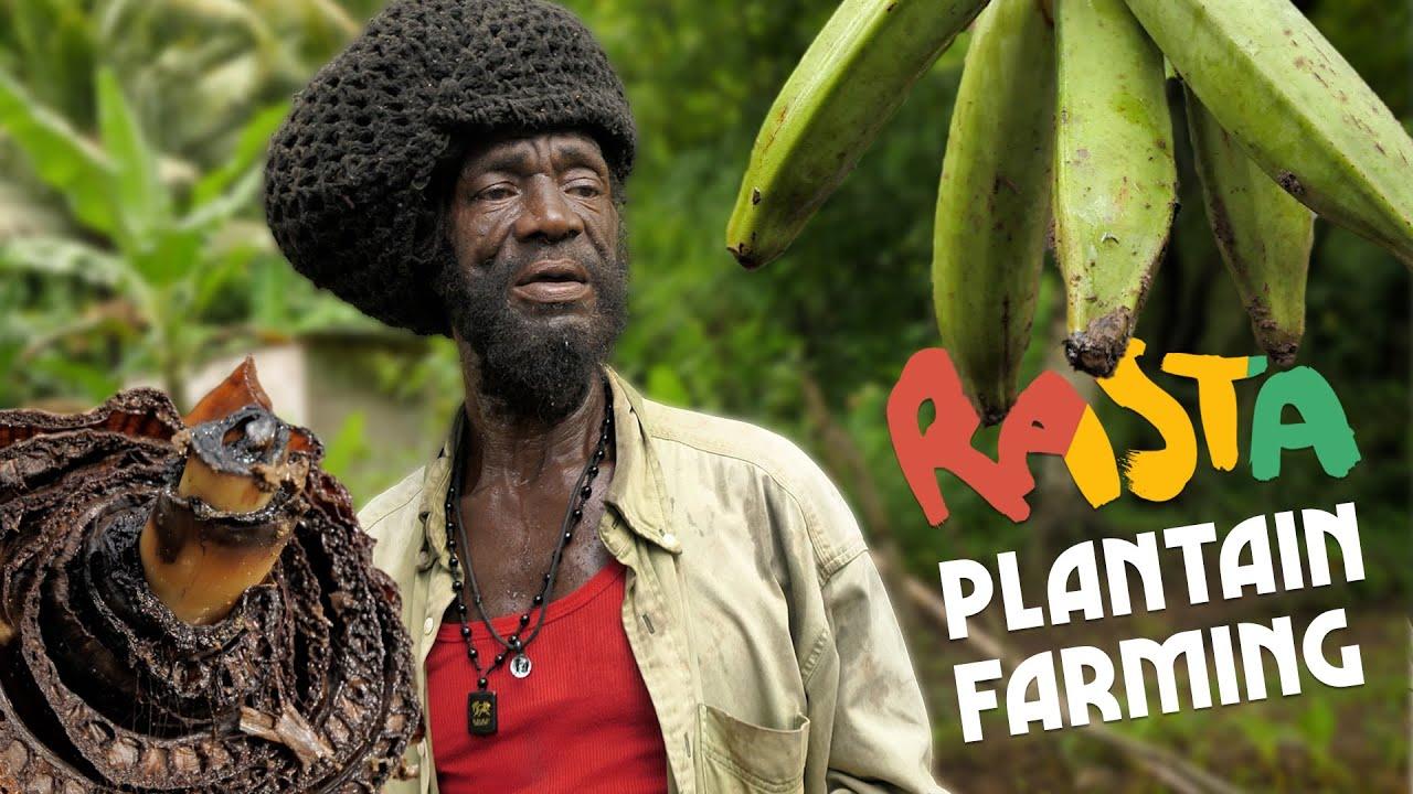 Ras Kitchen - Plantain Sucker | Slow Farming in Jamaica [1/8/2021]